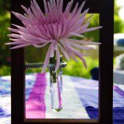 pretty_little_picture2