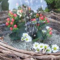 Not_So_Empty_Nest_600main