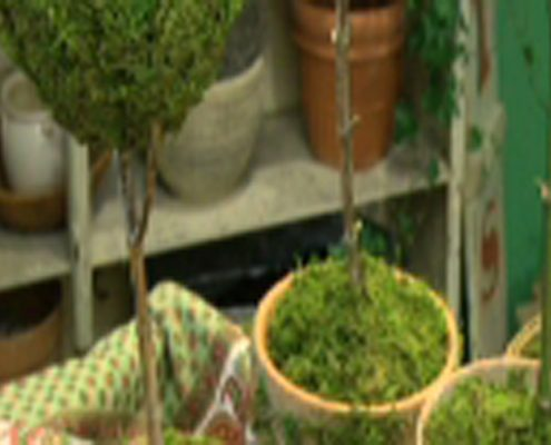 510_Grow_Tuillery_Topiaries_600main